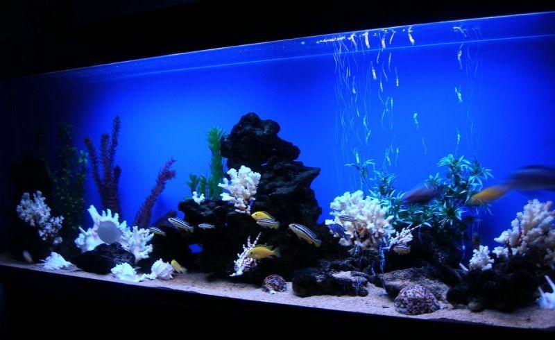 псевдоморье фото аквариумов