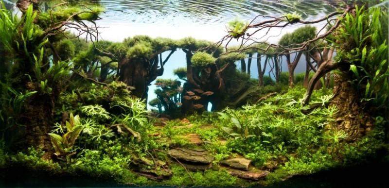 аквариумы фото