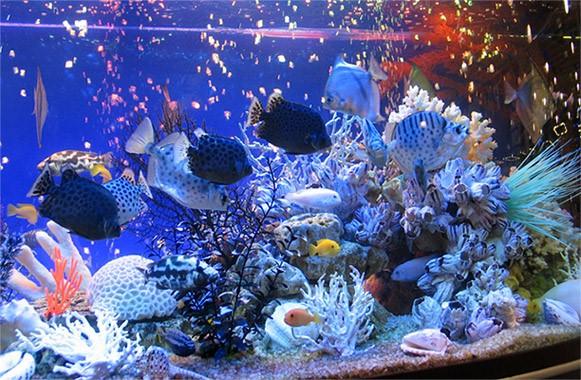 акварумы