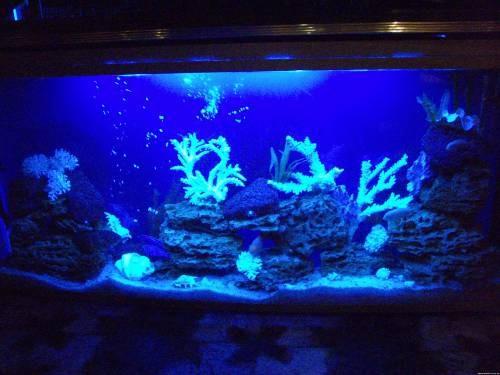 аквариумы имитация моря
