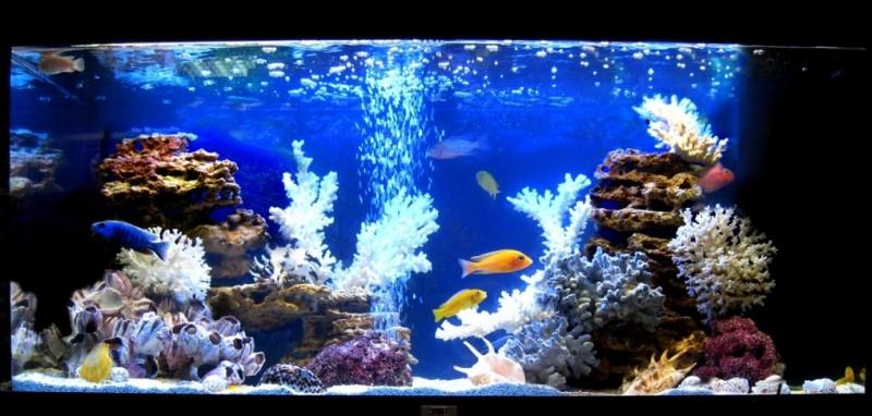 имитация моря в аквариуме