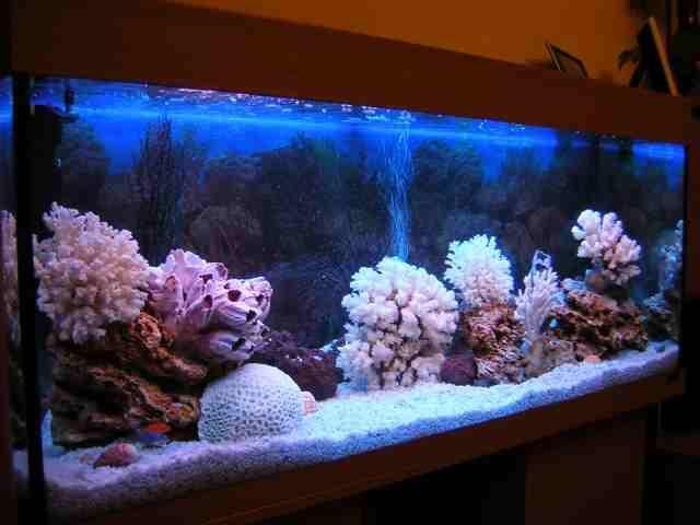 аквариум псевдоморье фото