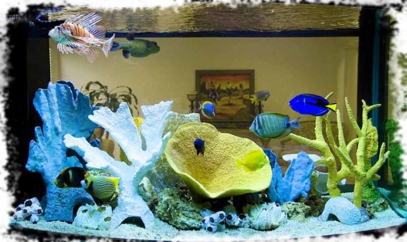фото морских аквариумов