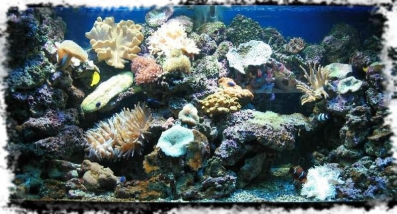 аквариумы фото морские