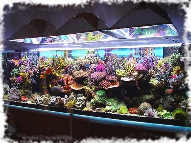 морские аквариумы фото