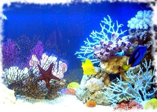 аквариум фото море