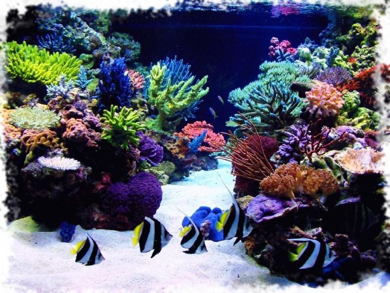 фотография морского аквариума