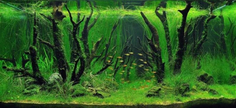 аквариум травник фото