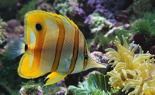 Рыбки картинки, фото