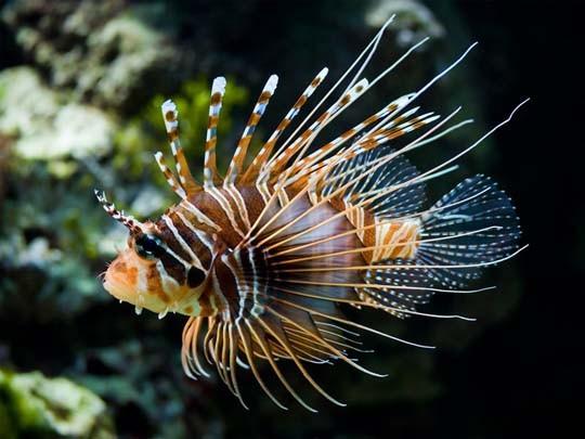 Рыбы картинки, фото