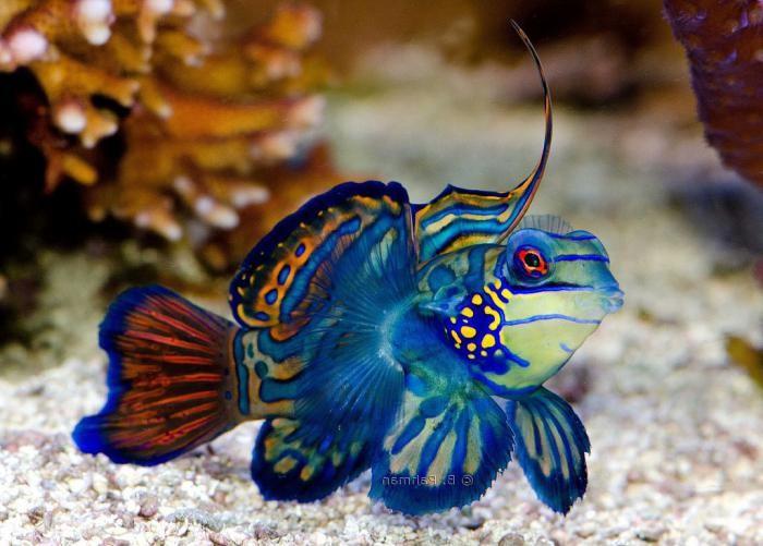 красива рыба