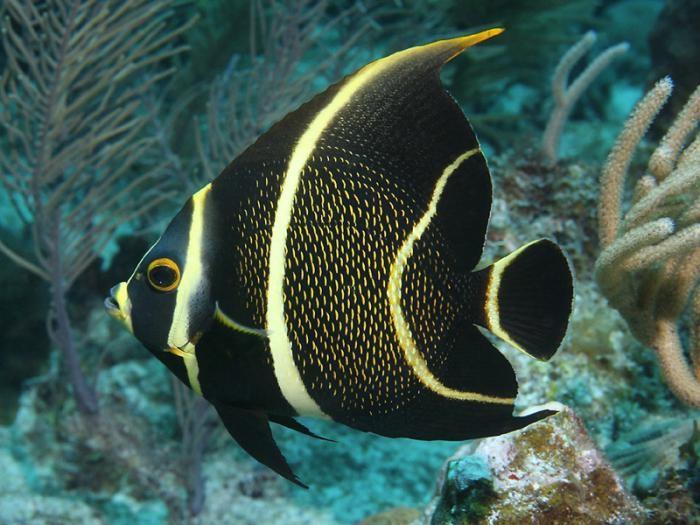 виды красивых рыб