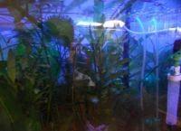 Ультрафиолетовая лампа для аквариума1