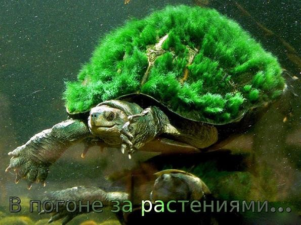 в погоне за покупкой аквариумных растений