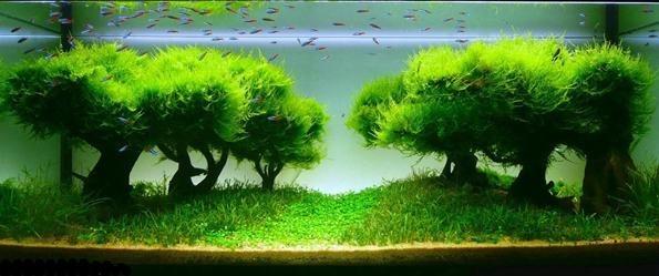 акваскейп с деревьями