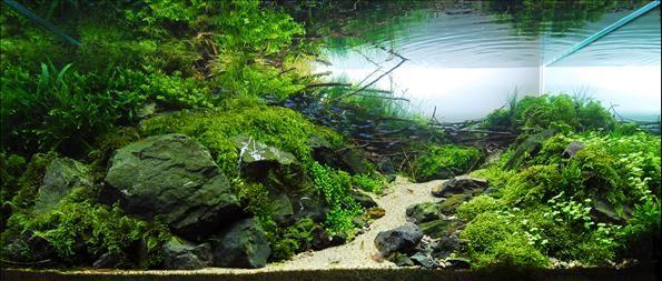 аквариум с растениями красиво