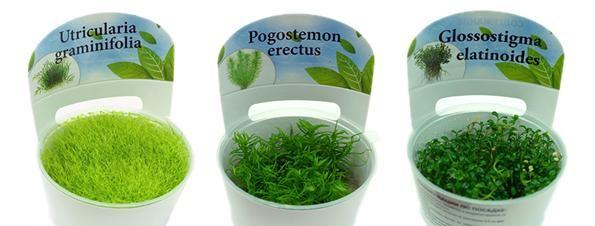 купить меристемные аквариумные растения