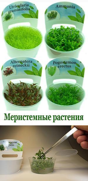 набор меристемных аквариумных растений