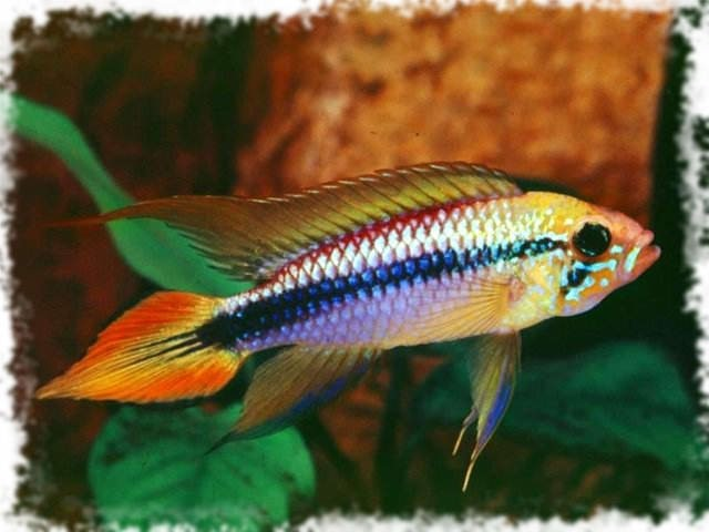 красивая рыба
