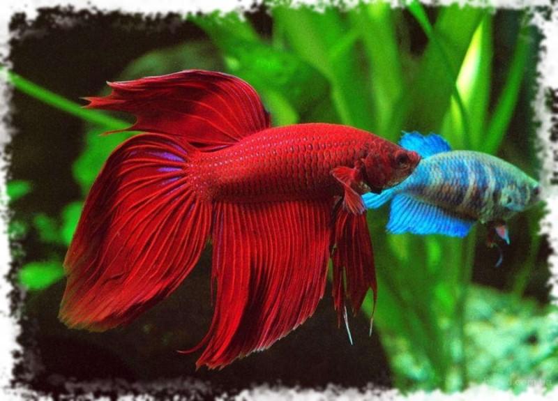 рыбка красивая