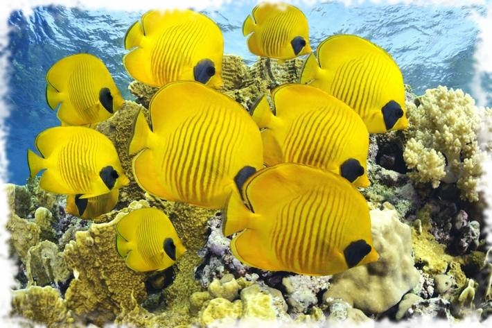 самая красивая рыбка