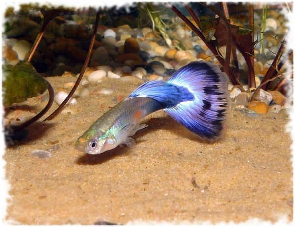 симпатичная рыбка