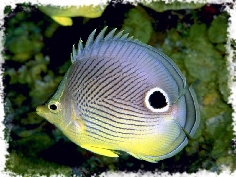 много красивых рыб