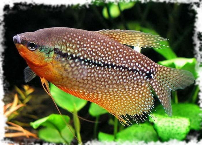 красивая морская рыбка