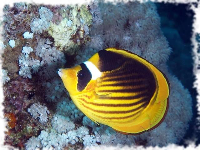 топ красивая рыбка