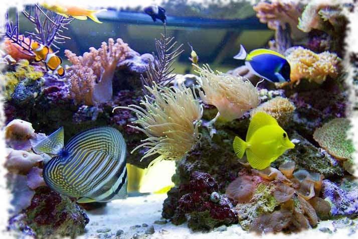 аквариумы морские фото