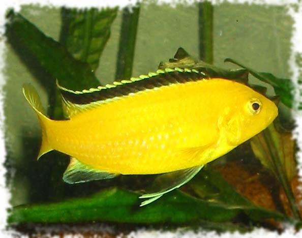 красивая рыбы