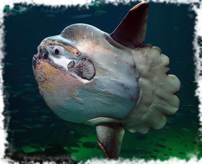 красавица рыбка