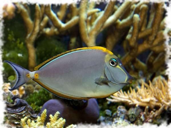 красивая рыбка