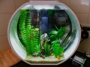 Маленькие аквариумы для рыбок