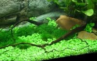 Коряги для аквариума 7