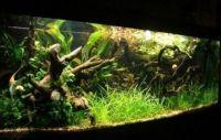 Коряги для аквариума 1
