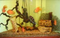 Коряги для аквариума 2