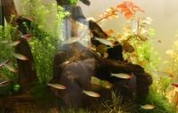 Коряги для аквариума 5