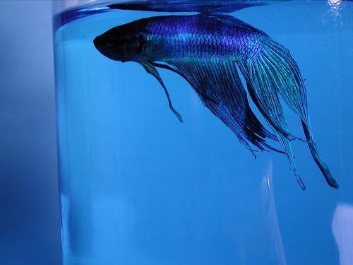 Метиленовая синь водный раствор