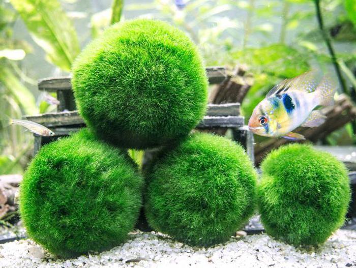 метиленовый синий применение в аквариуме