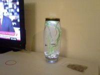 мини аквариум с подсветкой4