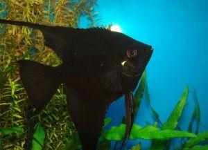 Мирные аквариумные рыбки2