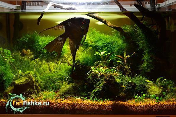 оформление аквариума мхами