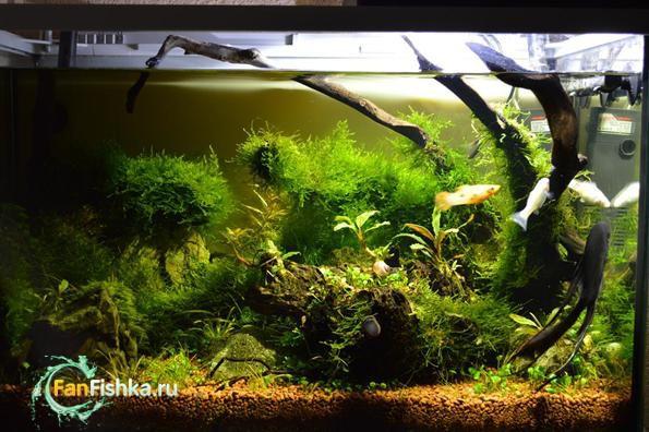 аквариум с мхами фото