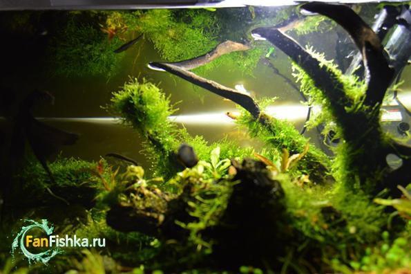 аквариум с мхами