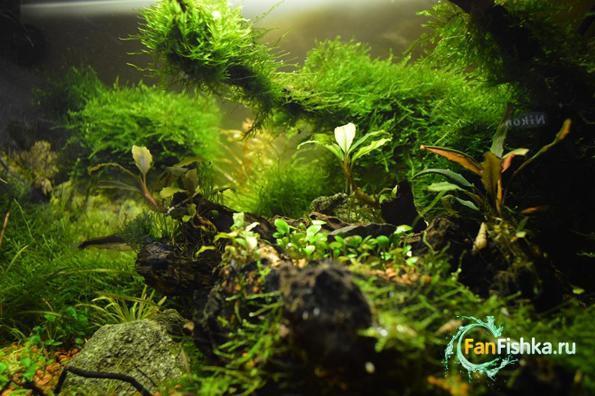 мох акваскейп