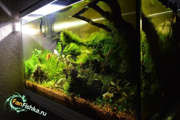 аквариум tetra