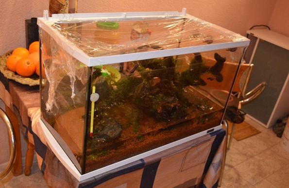 аквариум перезагрузка