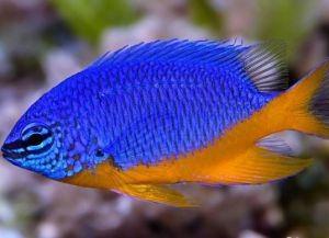 Морские рыбки для аквариума1