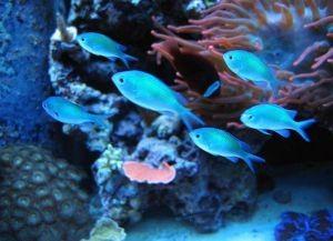 Морские рыбки для аквариума2